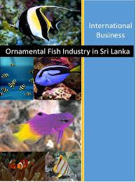 ornamental fish industry in sri lanka fishkeeping franchising