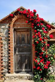 Build A Rose Trellis Climbing Rose Trellis Roselawnlutheran