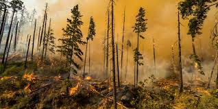 Wildfire Jumps California Freeway Torches Cars by Oregon Wildfires Burned These Areas Here U0027s How They Were Damaged