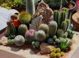 Succulent And Cacti Pictures Gallery Garden Design Free Images Nature Outdoor Growth Sunlight Desert Flower