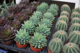 how to care for your succulents a pair u0026 a spare