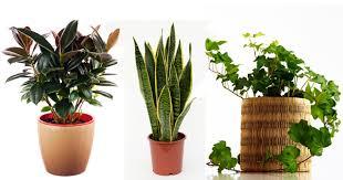 indoor plants india want better sleep keep indoor plants in bedroom blog nurserylive