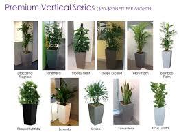 office plant plant rental vitae plants an eco and horti enterprise