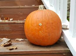 clever pumpkin clever and eco friendly ways to recycle old pumpkins
