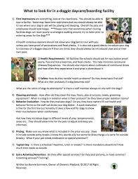 how to look happy what to look for in a doggie daycare boarding facililty chewie u0027s