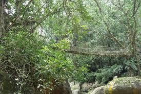 the living root bridges of cherrapunjee