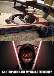 Star Wars Cat Meme - for cat fan of star wars by the lauthing guys meme center