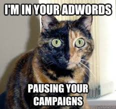 Internet Meme Cat - raleigh s top digital marketing team explained in cat memes