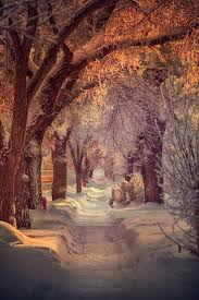 forever trees pinterest winter snow and scenery