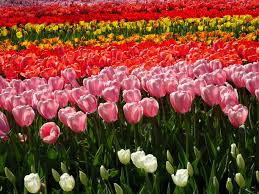 pictures of beautiful gardens with flowers flower power the beautiful gardens of keukenhof