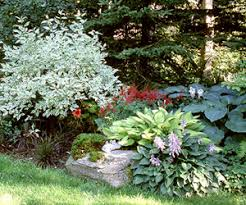 6 steps to a no work cottage garden