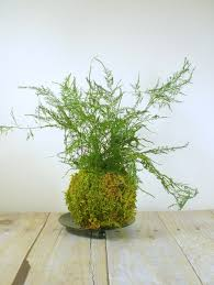 Fern Decor by Maidenhair Fern