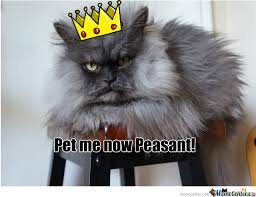 Colonel Meow Memes - colonel meow by lolabunny413 meme center