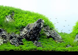 Mountain Aquascape Designing A Mountain Scene Iwagumi Layout For A Long Term