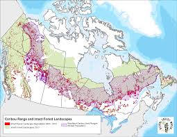 Russian Boreal Forest Disturbance Maps by Partner Post Five Percent Of Canada U0027s Pristine Forests Are
