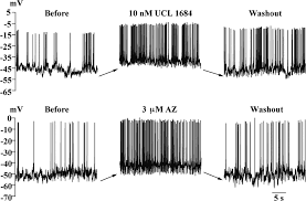 pharmacological properties and functional role of kslow current in