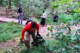 nc native plants invasive species mountaintrue