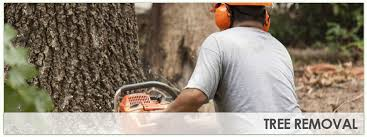 raleigh tree removal services