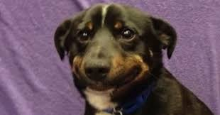 Confused Dog Meme - the shirk report â volume 309 â twistedsifter