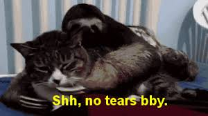 Angry Sloth Meme - sloth tears crying shh animated gif popkey
