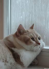 Sad Cat Memes - sad cat gif 14 gif images download