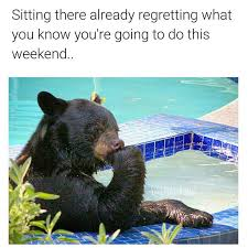 Animal Memes - 16 fresh animal memes to add some more awesomeness to your sunday