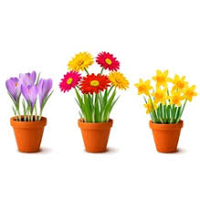 Vases With Flowers Flowers In Vase Royalty Free Vector Image Vectorstock