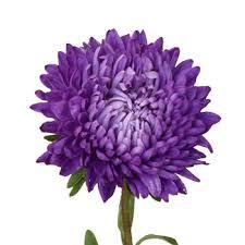 bulk flowers asters purple bulk flowers