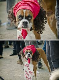 Boxer Dog Halloween Costume 12 Halloween Costumes Suggest Frenemy College Magazine