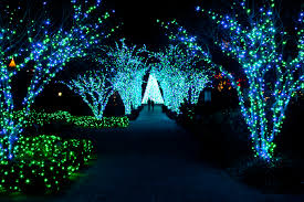 innovative botanical gardens lights atlanta botanical gardens
