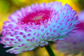 nice flower free stock photo public domain pictures