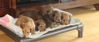 dachshund dog beds kuranda dog beds