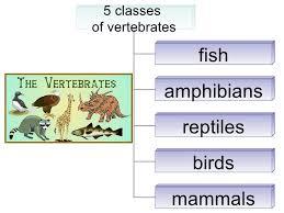 5th grade ch 1 lesson 2 how do we classify vertebrates
