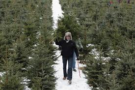 best christmas tree cutting experiences near seattle cbs seattle