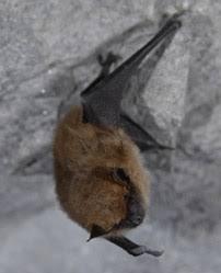 small bat http naturespect all about bats html damage