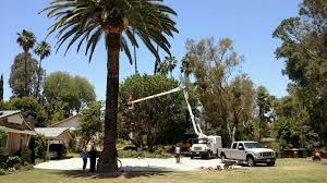tree trimming 3d commercial tree service