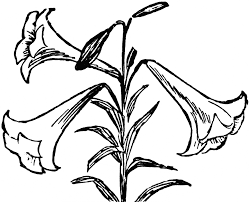 easter lily cliparts free download clip art free clip art on