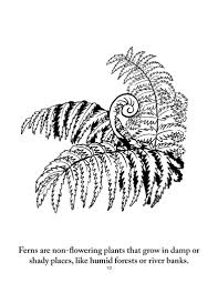 botany coloring pages sassafras science