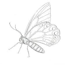 18 free advanced bug coloring pages images