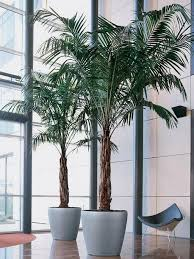 best 25 house plants for sale ideas on pinterest hanging