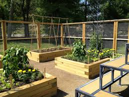 backyard raised vegetable garden ideas