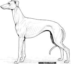 greyhound coloring yuckles