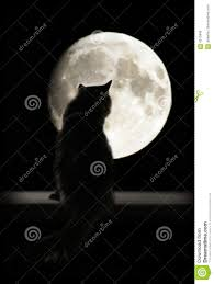 cat and moon stock photo image of photo mammals 4315846