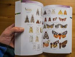 Winter Garden Book Review Book Review Field Guide To The Moths Of Great Britain And Ireland