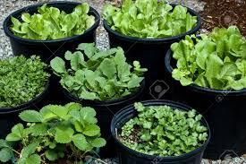 portable herb garden herb garden images u0026 stock pictures royalty free herb garden
