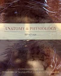 anatomy u0026 physiology bio 425 426 custom edition borough of