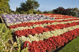 American Flag On Ground Red White And Blue Flowers For July 4th Plantings