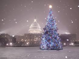 u s capitol christmas tree 2007 season pinterest christmas tree