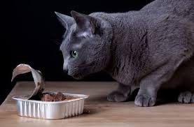 kidney disease in cats good pet parent