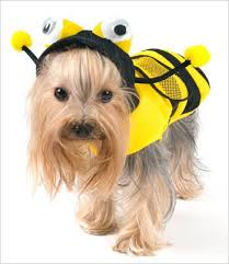 dog costumes for halloween and special events u2013 g w little